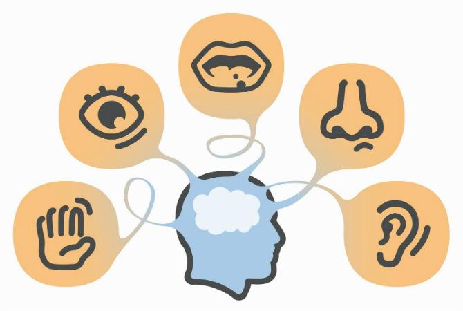 curiosidades de los 5 sentidos